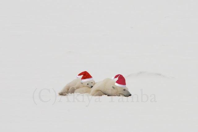 写真 2012-12-13 12 55 58.jpg
