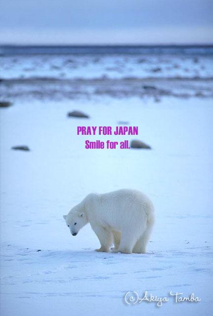 polarbear01s.jpg